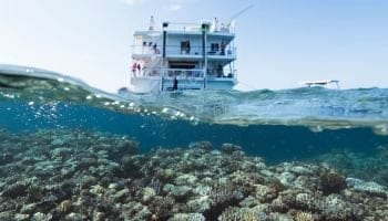 Solo travel deals - Coral Expeditions