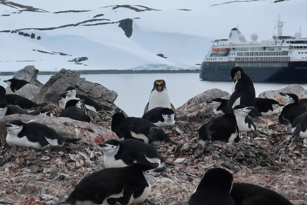 Antarctica with Silversea. Penguins on land